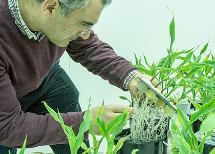 Plant Nutrition and Physiology Lab